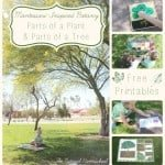 Montessori-Inspired Botany: Parts of a Plant & Parts of a Tree (Free Printables)