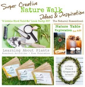 Super Creative Nature Walk Ideas & Inspiration (link party 37)
