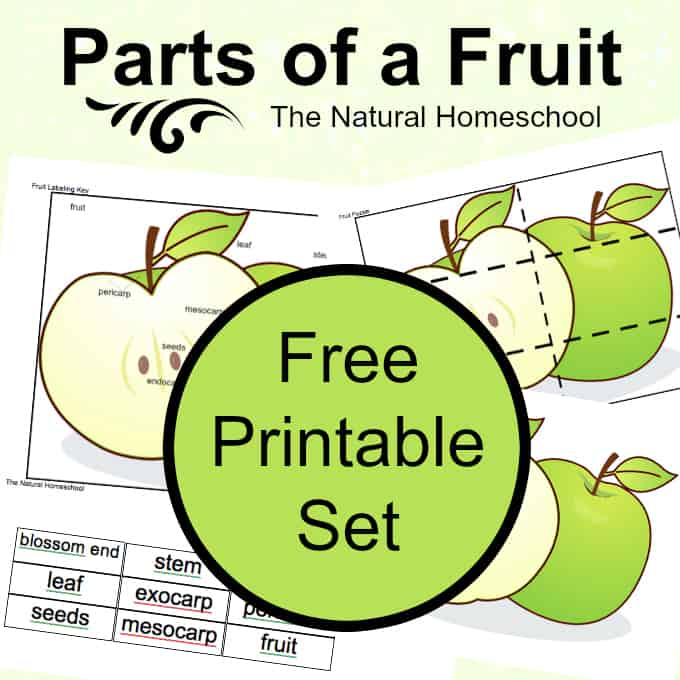 Fruit Printable