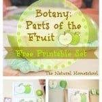 Parts of a Fruit Lesson (Free Printable Set)