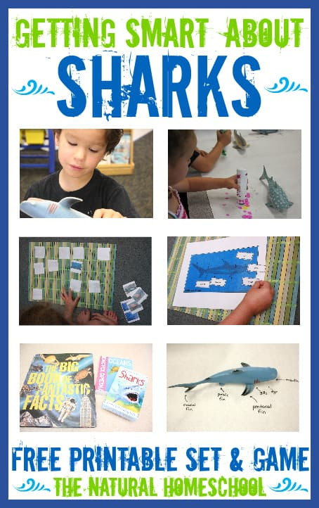 Getting Smart about Sharks (Free Printables)