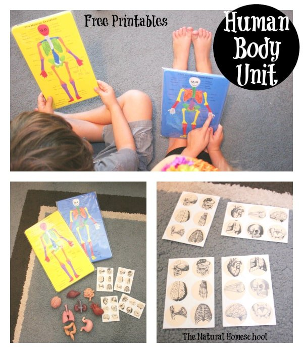 Montessori-Inspired Biology: Human Skeleton Study Guide {Free Printables}