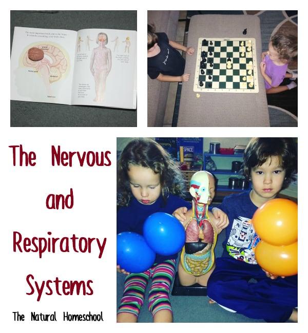 Brain respiratory