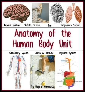 Anatomy of the Human Body Unit