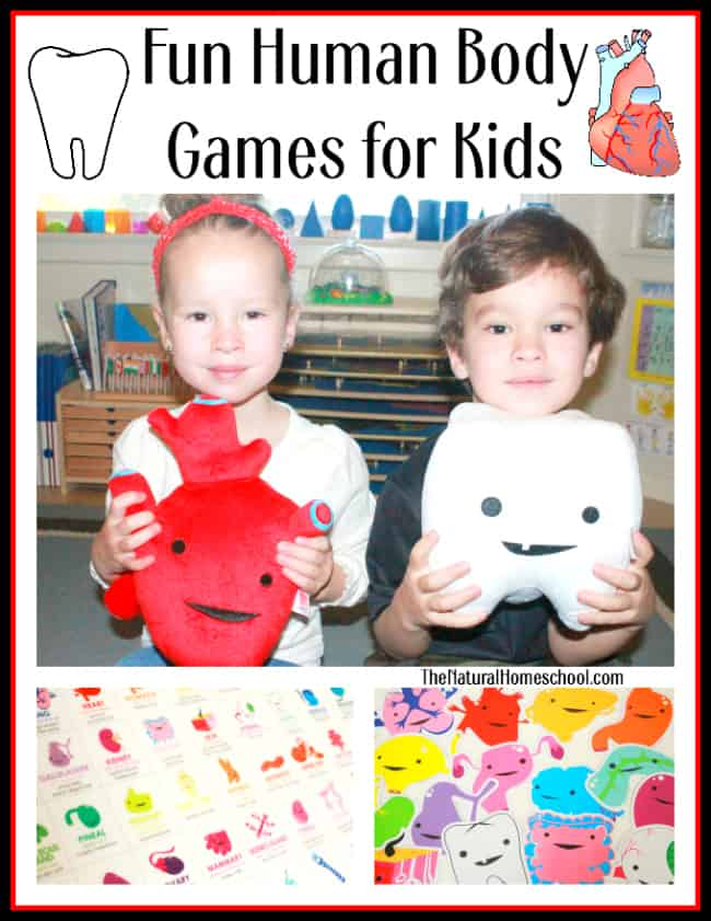 Human Body Games for Kids