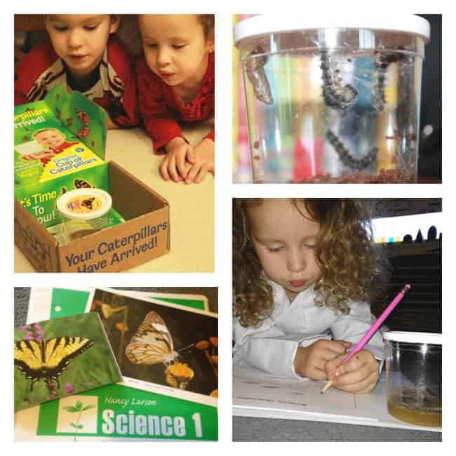Examining the Characteristics and Life Cycles of Insects (and Spiders)