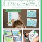 Frog Life Cycle for Kids {Printable Set}