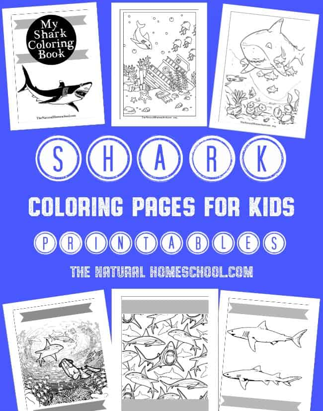 Shark Coloring Pages for Kids