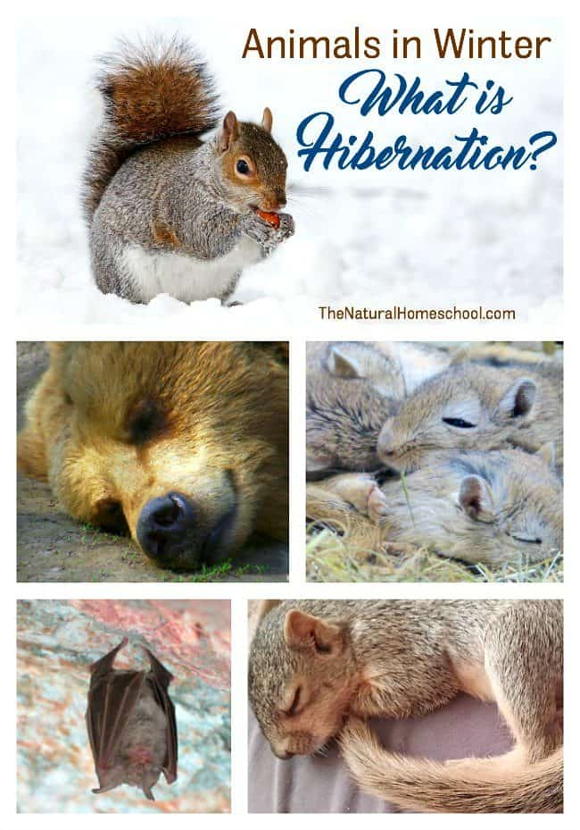 Animals That Hibernate In Winter List