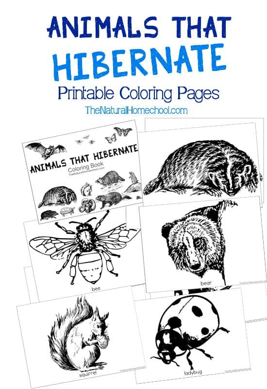 Printable Coloring Book Pictures Of Animals : Animals that hibernate in winter printable coloring book the