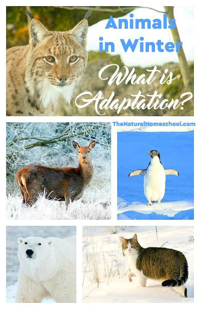Animals in Winter: What is Adaptation? - The Natural ...