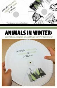 Animals in Winter: Hibernation, Adaptation and Migration Printable Craft