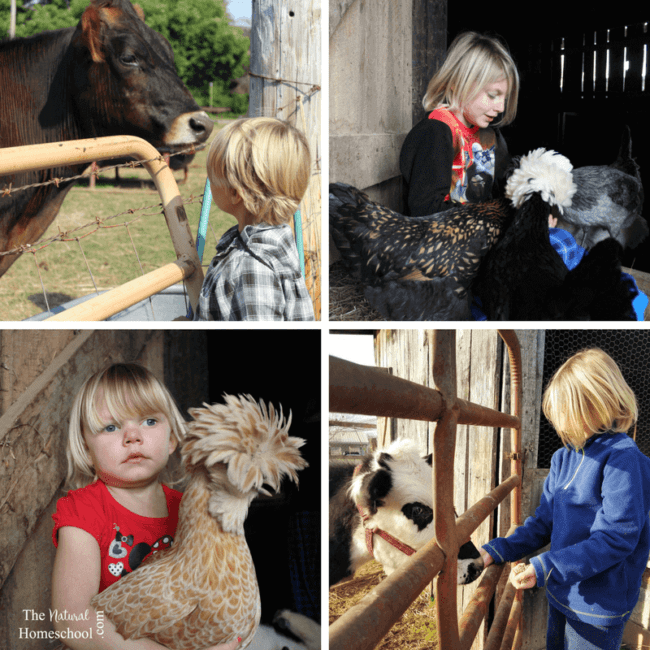 We've learned a tremendous amount about farm life in the year since our move. I think by far the best part has been understanding the roles animals play on the farm.