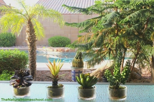 the best realistic artificial house plants the natural homeschool. Black Bedroom Furniture Sets. Home Design Ideas