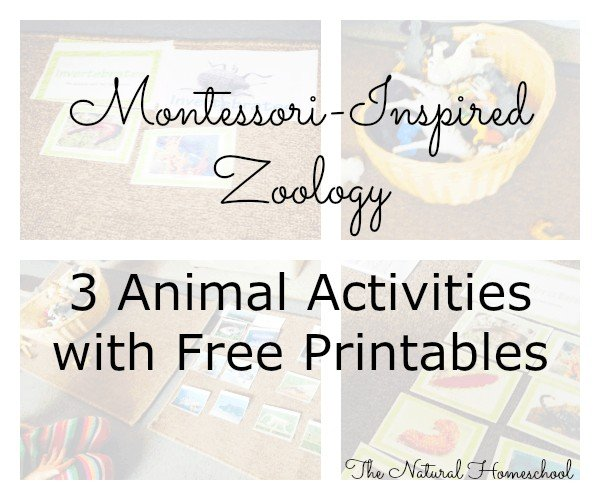 Montessori-Inspired Zoology: 3 Animal Activities with Free Printables
