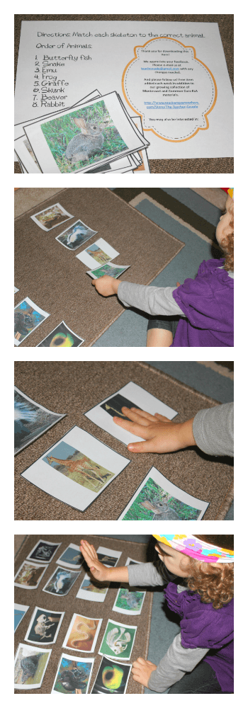 Montessori-Inspired Animal Activities