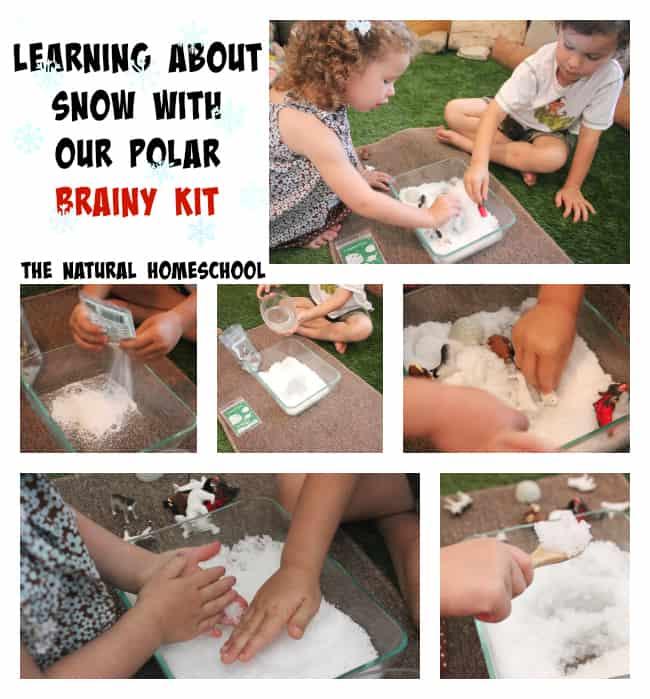 A Week of Polar Fun with Brainy Kit!