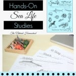 Hands-On Sea Life Lessons