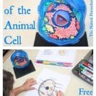 Parts of the Animal Cell (Free Printables)