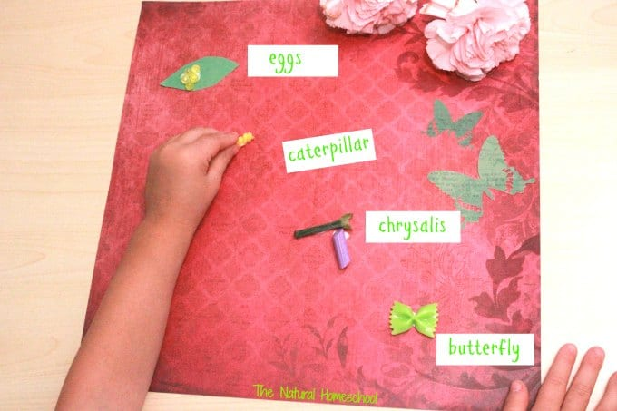 3 Butterfly Life Cycle Crafts & Resources