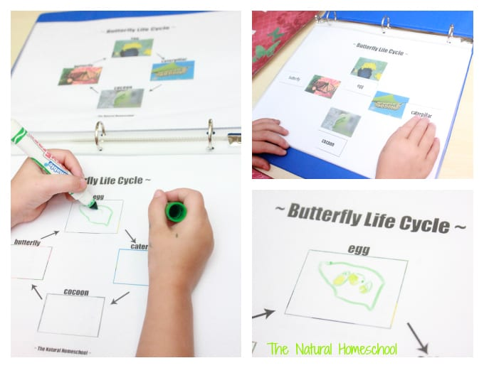 Butterfly Life Cycle Activities & Crafts (Free Printables)