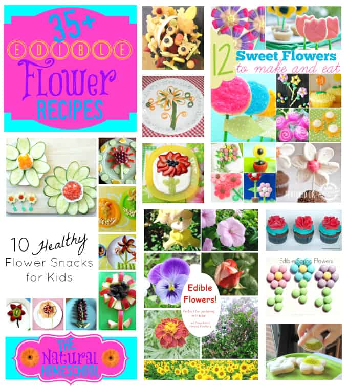 35+ Edible Flower Recipes