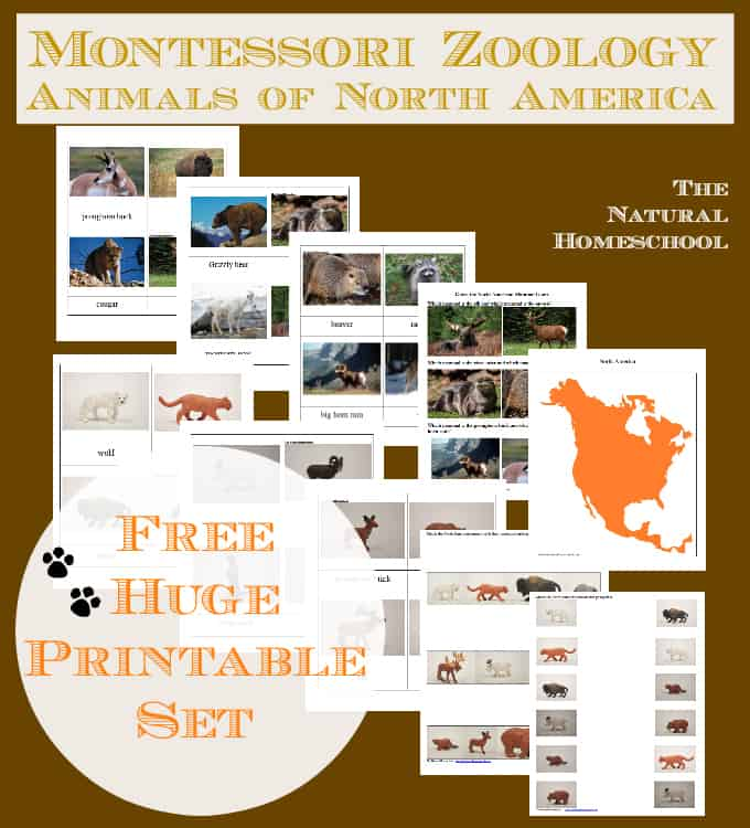 Montessori Zoology: Animals of North America (Free Printables)