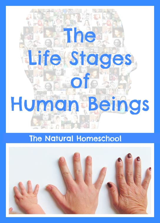 The Life Stages of Human Beings Unit