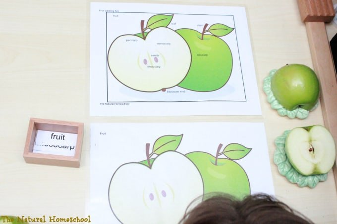 fruit 6