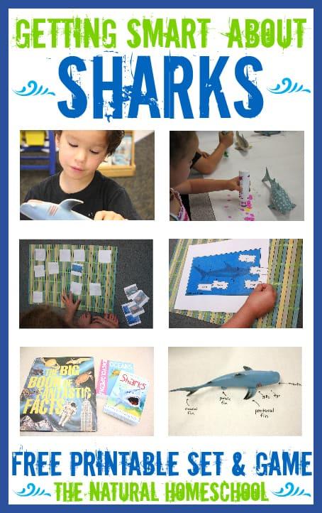 sharks main