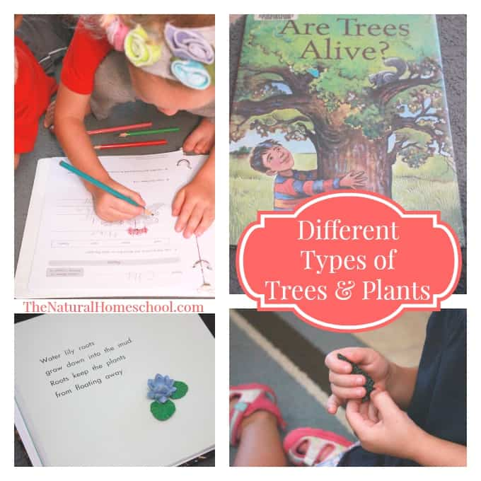 Observing Parts of Trees & Plants {Lessons, Hands-on Activities & Books}