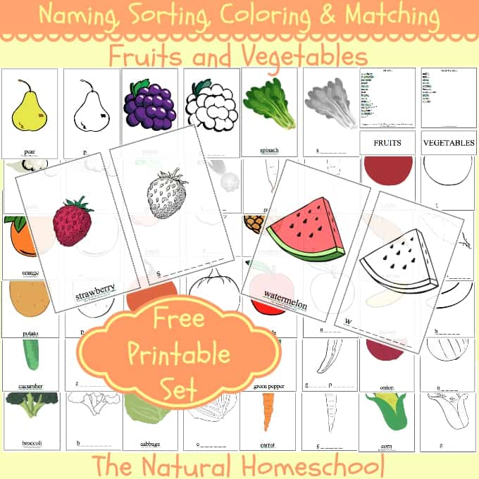 photo about Printable Vegetables named Naming, Sorting, Coloring Matching Culmination Veggies