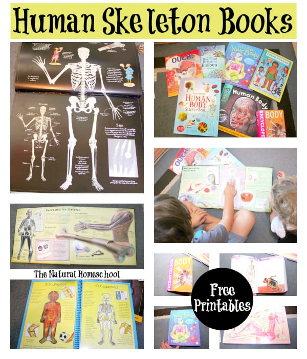This is a human skeleton study guide. We are focusing on the skeleton. We learned so much! In this post, you will take part of all the fun we had learning about bones and how our skeletons hold us up.