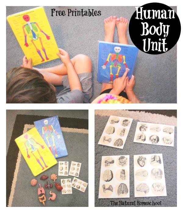 Montessori-Inspired Biology: Human Skeleton Study Guide {Free Printables}