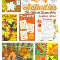 Fall Leaves Activities for Families