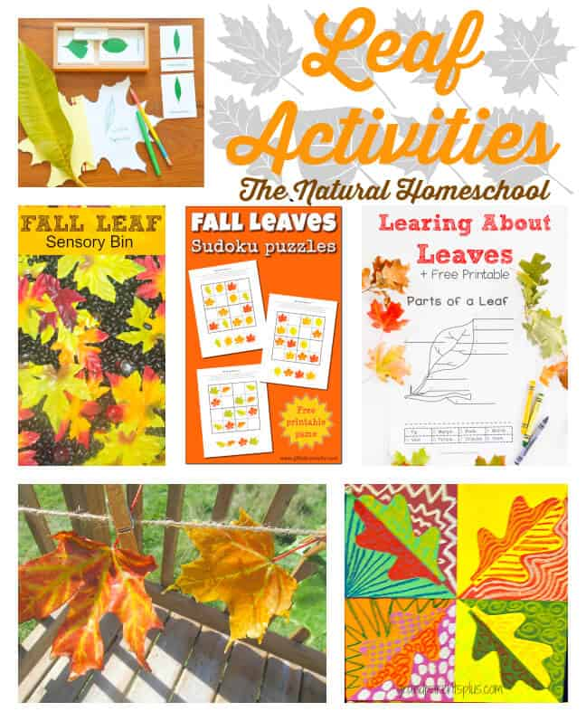 These Fall Leaves Activities for Families are the best!