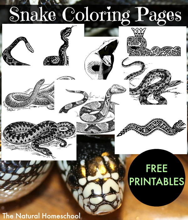 A Complete Snake Unit Free Printables