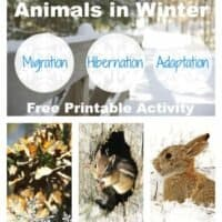 The Best Animals that Hibernate, Migrate and Adapt ~ Free Printable