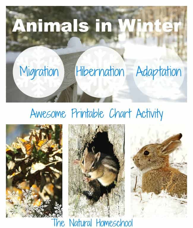 Animals In Winter Migration Hibernation Adaptation Printable