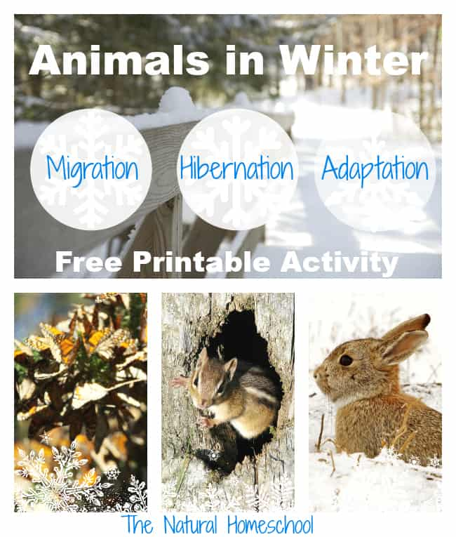 animals in winter main