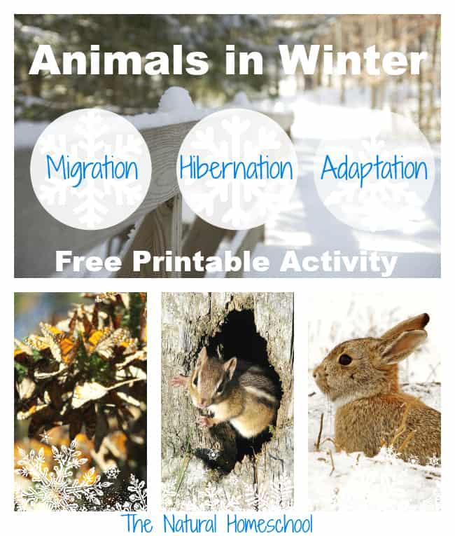Snow & Ice - Kids Arts & Crafts Activities