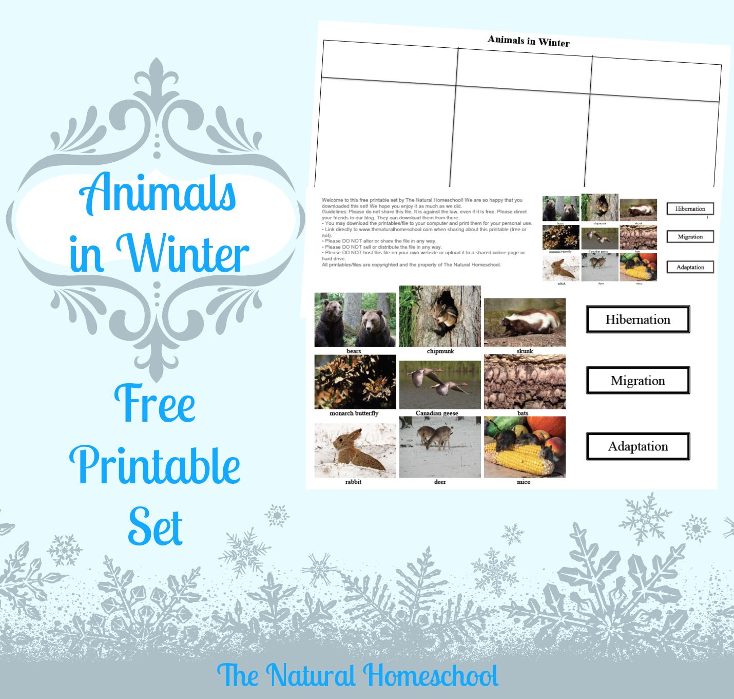 Animals in Winter: Migration, Hibernation & Adaptation {Printable ...
