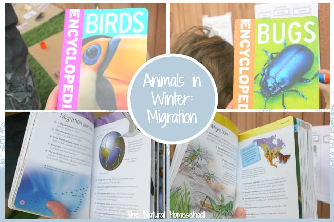 Be sure to check out our Animals in Winter – Awesome Printable Bundle because it is a complete unit, full of information about Animals in Winter: Migration, Hibernation & Adaptation. This post is an introduction, but the unit goes in depth with lots of activities, printables and ideas!