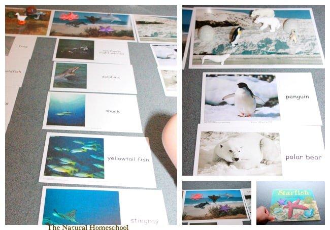 Investigating Animals & Their Habitats