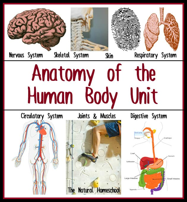 anatomy main final