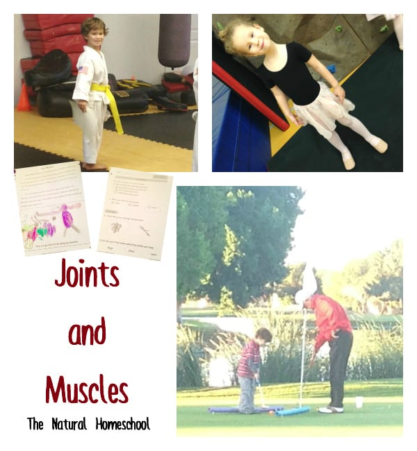 joints muscles