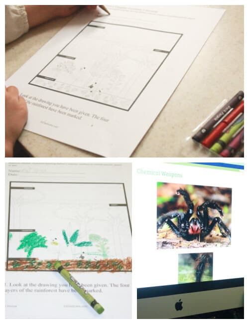 Lessons and Images about Rainforest Animals and Plants