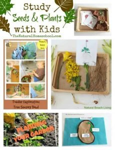 Study Seeds and Plants with Kids {Link Party 82}