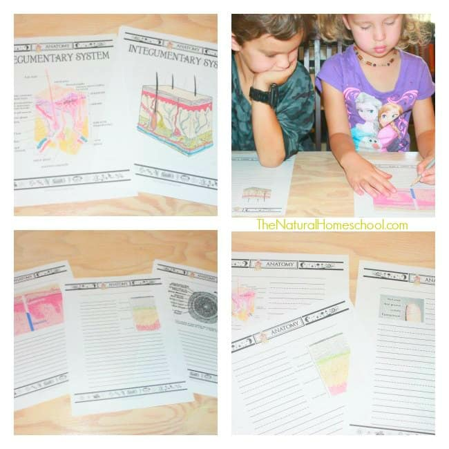 Printable Skin Lessons for Kids using Notebooking