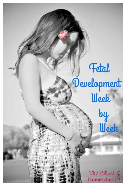 Fetal Development Week by Week
